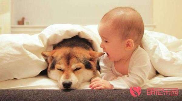 和狗狗睡在一起有哪些危害