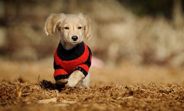 狗狗驱虫后常见的不良反应有哪些